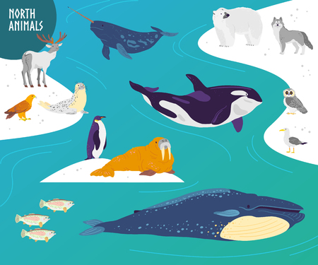 Vector flat hand drawn set of north animals, birds, fish: polar bear, owl, whale, penguin. Northern landscape with snow and water. For banner, zoo illustration, logo, card, children alphabet, print.