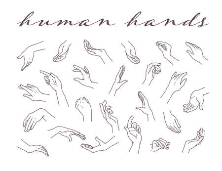 Collection of human hands in different gestures and posses isolated on white background. Vector hand drawn line art illustration