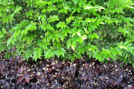 Beautiful Hedge photo