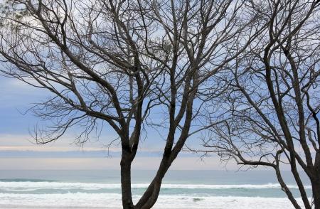 Tree Silhouettes by the beach photo