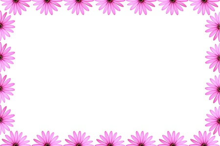 closeup of pink daisy with: Pink Daisy Frame Stock Photo