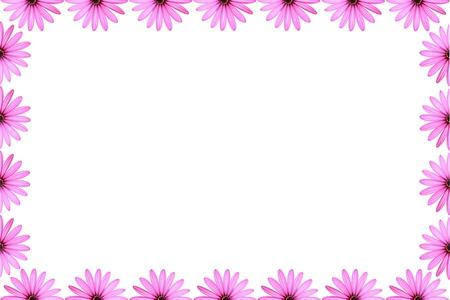 Pink Daisy Frame Stock Photo