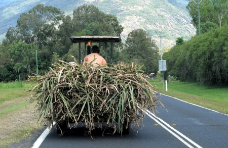 Carting Sugar Cane