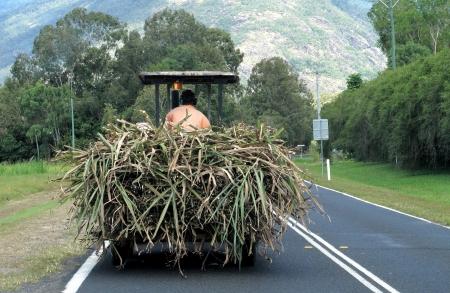 road tractor: Carting Sugar Cane Editorial