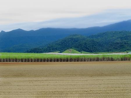 Canefield Northern Queensland  photo