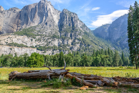compliment: Yosemite National Park.  Fallen trees became a pile of logs that echo and compliment the mountains behind them in the distance. Stock Photo
