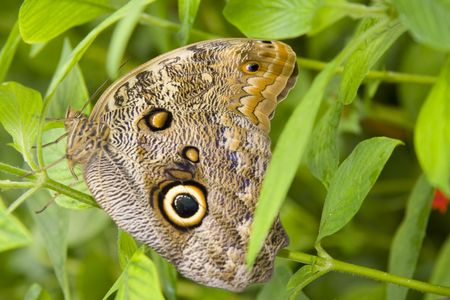 speckle: Tropical butterfly Stock Photo