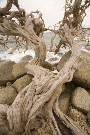 tortured: Tortured tree