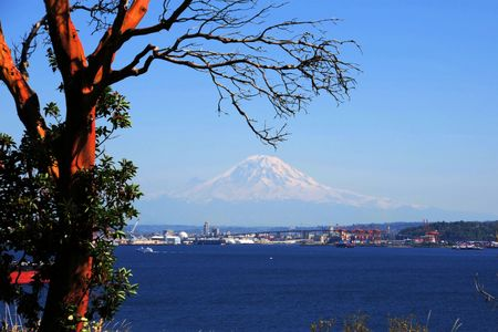 puget: View of Mt. Rainier across Puget Sound with madrona tree in foreground