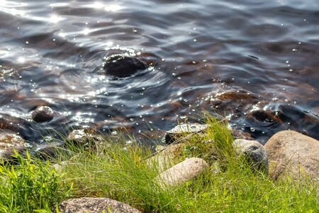 Bright sunny green yellow grass close-up with stones and water of finnish river natural template vibrant background