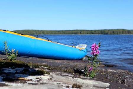 Raft boat on rocky beach with small wild purple flowers macro on lake sunny day Finland
