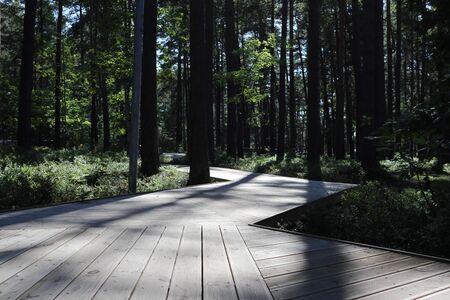 City Jurmala park rest area green pone trees walk path wooden way with sunlight tree shadow