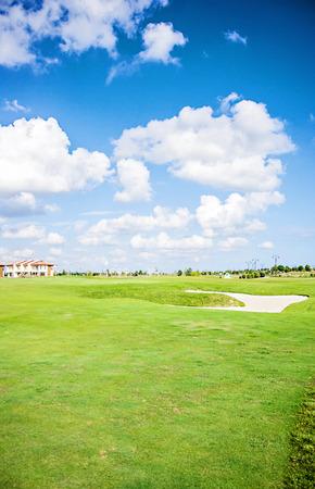 golf field: Green gras of the golf field.