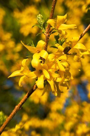 Yellow blossom Stock Photo - 4844900