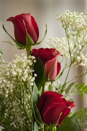 red roses: Three Red Roses Say Love