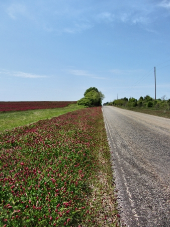 Country Road Lined In Crimson Clover Stock Photo - 14729527