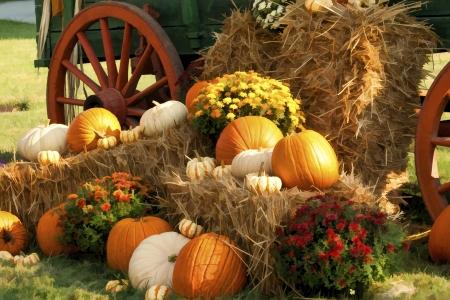 Autumn Bounty photo