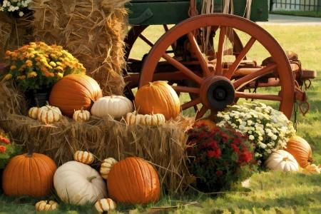 Süd-Ernte-Zeit-Anzeige in Herbstfarben Standard-Bild - 15339576