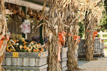 gourds: Limestone County Produce Stand