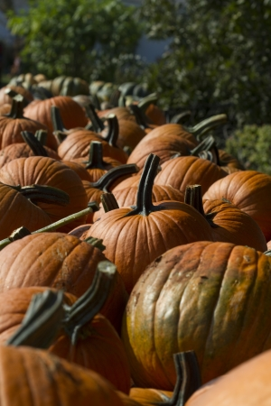 roadside stand: Straight From The Pumpkin Patch Ready To Carve