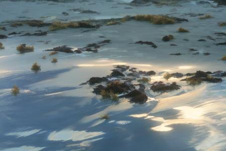 Nature s Morning or First Light Digitally Painted Sandy Beach Reklamní fotografie