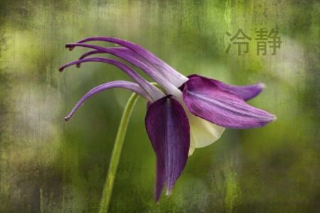 symboll: Columbine Blossom with Japanese Serenity Symboll Stock Photo
