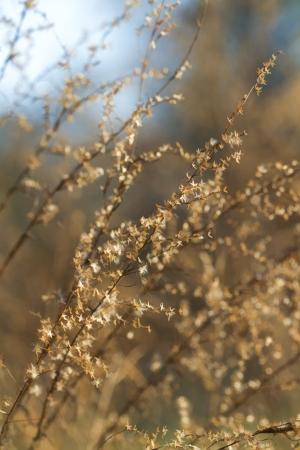 glistening: Relucir Hierbas pairie Oro