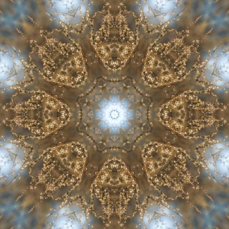 Glistening Golden Prairie Weed Kaleidoscope