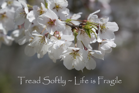 tread: Tread Softly - Life Is Fragile Spring Floral