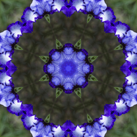bearded iris: Purple Tall Bearded Iris Kaleidoscope Stock Photo