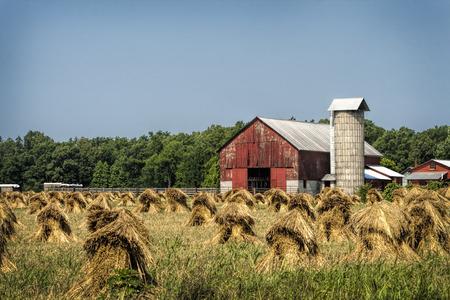 手カット小麦スタックと古い赤い納屋の風景 写真素材