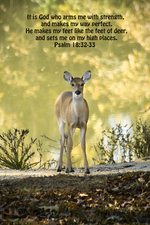 verse: Whitetail Deer and Psalms Bible Verse Stock Photo