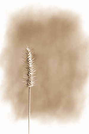 Sepia Brown Tone Grass Plume Background Banco de Imagens