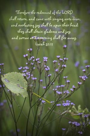 Purpletop Vervain Verbena Bonariensis Wildflowers Bible Verse