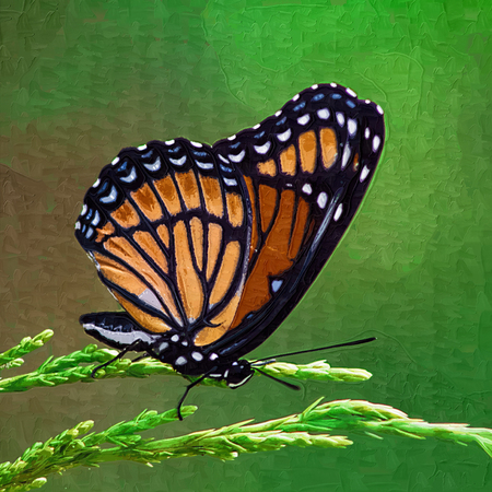 danaus: Digitally Painted Monarch Butterfly