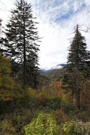 Great Smoky Mountain National Forest Standard-Bild - 120983557