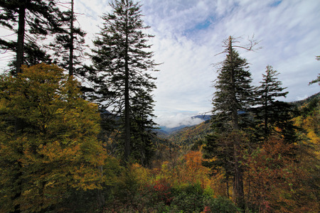 Great Smoky Mountain National Forest Park