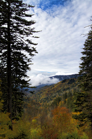 Great Smoky Mountain National Forest Landscape