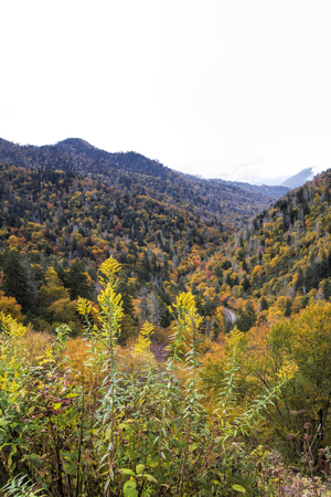 Great Smoky Mountains in Fall Colors Landscape Stock Photo