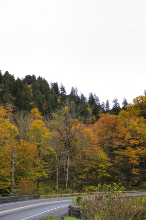 Great Smoky Mountains National Park Highway Fall Colors Foto de archivo - 120983562