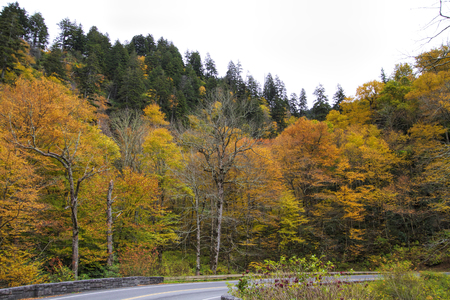 Orange and Yellow Trees Great Smoky Mountains Park Foto de archivo - 120983563