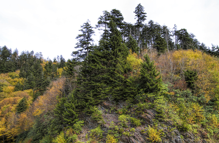 Great Smoky Mountains Autumn Landscape 3 Foto de archivo - 120983569