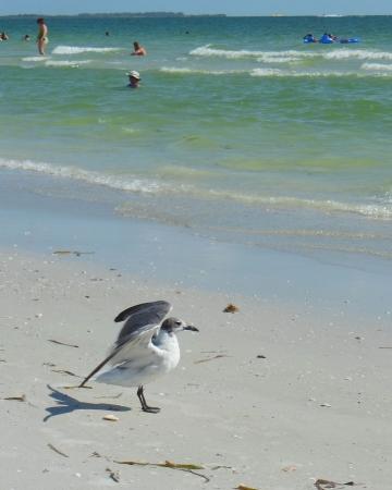 Zeemeeuw met vleugels op strand