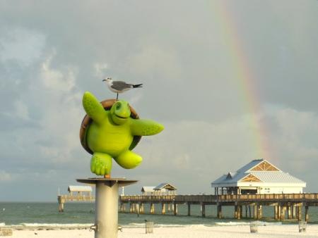 Seagull op het hoofd van een schildpad door Clearwater Beach pier met regenboog Stockfoto