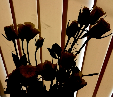 Silhouettes of roses in front of blinds