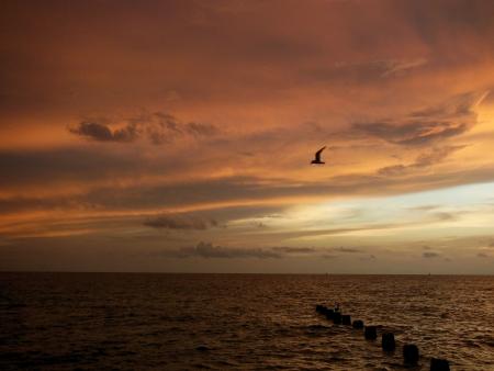 Seagull vliegen over het opstapelen bij zonsondergang in de Golf van Mexico Stockfoto