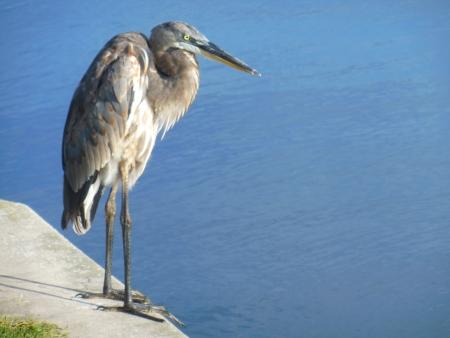 Grote tropische vogel in Florida park Stockfoto