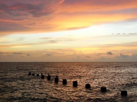 Vogels op Pilings Kijken Golf van Mexico Zonsondergang