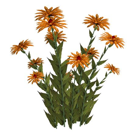 白い背景の上のオレンジ色のファンタジーの花 写真素材