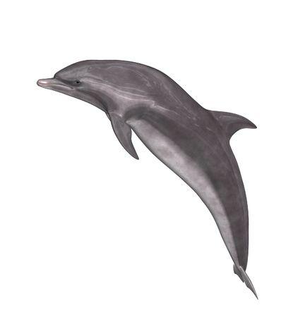 ballena: Un delf�n gris y blanco Foto de archivo